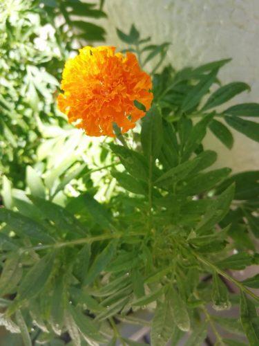 花咲の庭に・・・